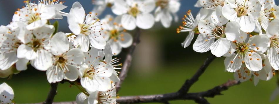 Пролет пукна